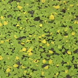 FISHMAN FSA-R-7557 7.5mm 4'x25' RL LAMINATED SPORTS ABSORBER GREEN 100sft